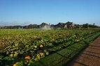 Harvest_Harvest Farms