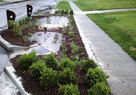 Middle Blue_Bioretention Rain Garden