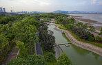 Shenzhen Bay_Local Ecologies