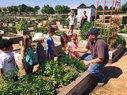 Harvest_Garden Plots