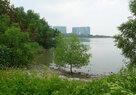 Shenzhen Bay_Natural Ecologies