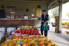 Harvest_Tassione Farms