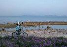 Shenzhen Bay_Mudflats