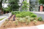 1315 Peachtree-Planting Bed