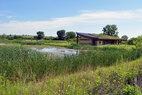 Wetland Ponds