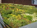 ASLA Green Roof-Planted Waves
