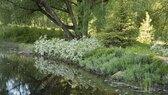 Cascade-Pond