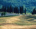 Castiglion-Cypress