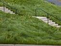 Cavallo Point-Dwarf Grass