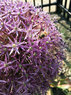 Chester-Pollinator