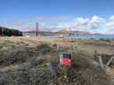 Crissy-Field-Golden-Gate
