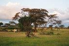Eagle View-safari