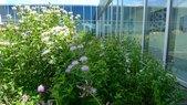 Gary Comer-Perennial Plots