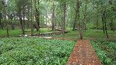 Glenstone-woods