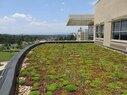 JMU-Green Roof