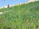 KSU-Memorial-butterfly-walk