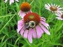 Kroc-Bee