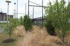Kroc-Meadow