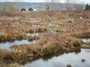 Magnuson_wetland1