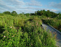 Magnuson_wetland2