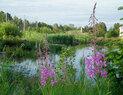 Magnuson_wetland3