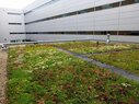 McKinley-Green Roof
