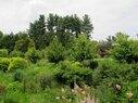 Nevin-Bioswale Garden