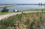 Portage-Dune Grasses