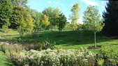 Regenstein-Rain Garden