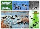Tangshan-Birds