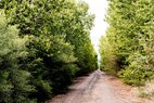 Yuma-Cottonwoods