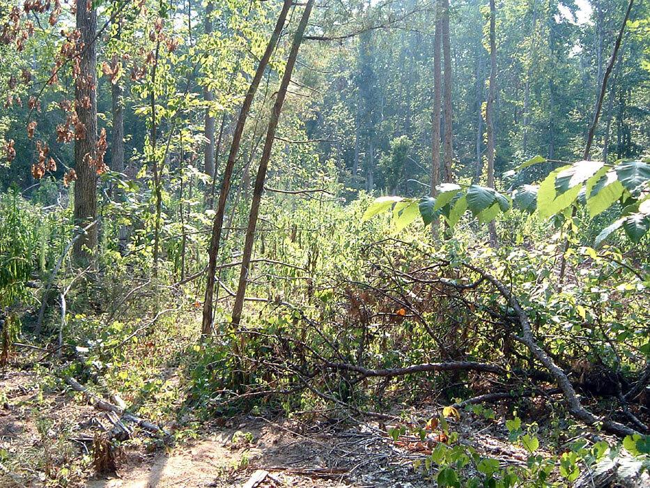 North Carolina Botanical Garden Education Center