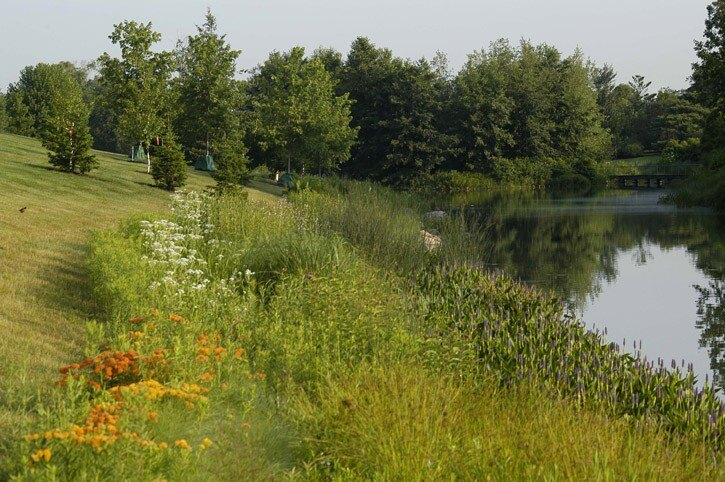 Chicago Botanic Garden Lake Shoreline Enhancements   Landscape